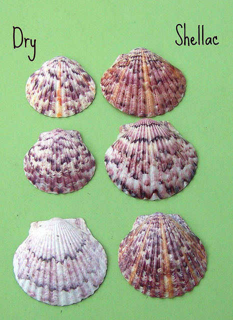 before after shells