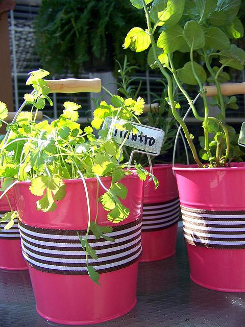 Diy Kitchen Window Herb Garden Hi Sugarplum