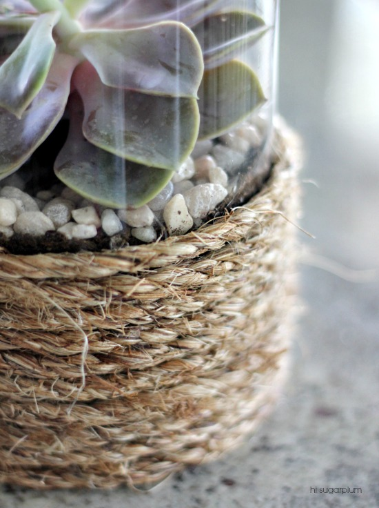 Hi Sugarplum | Dollar Store Terrariums