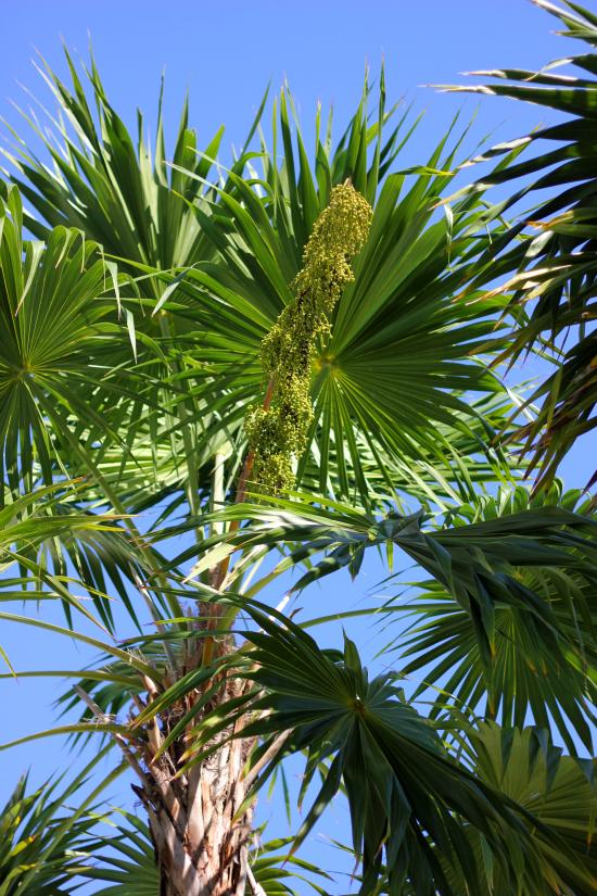 Hi Sugarplum   Trip Report: Miami Beach